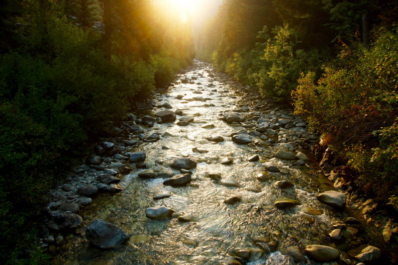 Bridge Creek -Tyler Goodman