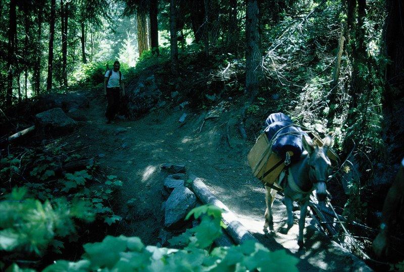 June 1965 - Dusty Trail