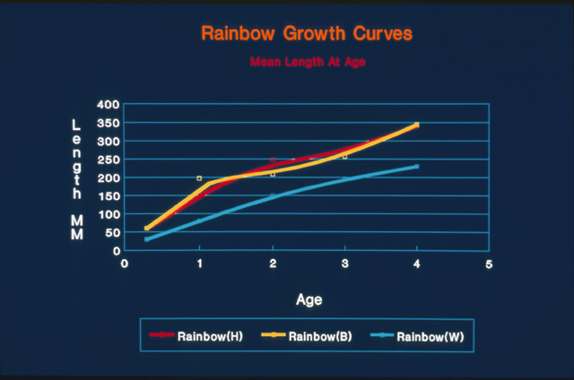 This slide shows the difference in growth rates for rainbow trout from lakes with hatchery stocking only (red), lakes with hatchery and wild fish (yellow) and wild fish only (lite blue).  The growth rates for the wild only fish are again depressed in comparison with rainbow from other lakes where natural reproduction is not excessive.
