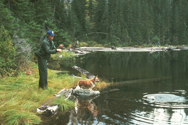 Here John Thomas is about to land a fiesty rainbow.  Note the green colors of his raingear blend in with the general foliage colors of the surrounding evergreen trees.