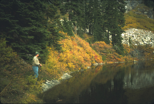 Here I am stalking cutthroat that are surface feeding within 50 feet of the shoreline.  Wearing a camoflage shirt helps to reduce spooking these fish.  The reward was a nice cutthroat just after this picture was taken.