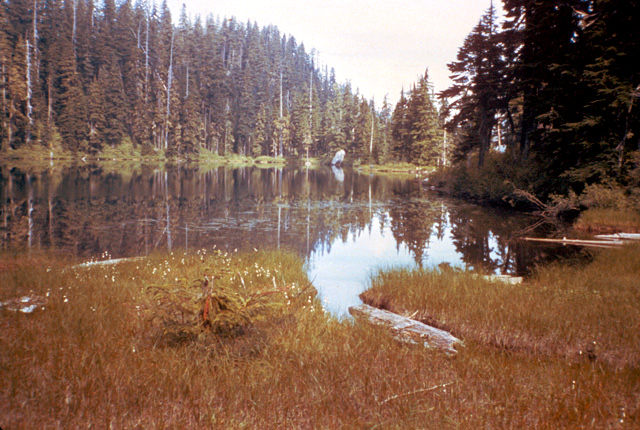 The most productive lakes tend to be mid-elevation shallow lakes, with substantial sedge grass along the shorelines and vegetated drainages.  This lake is an excellent example of a prospective productive lake.