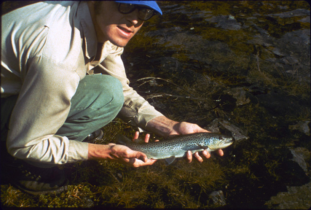 A 14 inch German Brown trout stocked in a high lake with an excessive population of brook trout to see if the browns would help control the population by preying on brook trout fry.