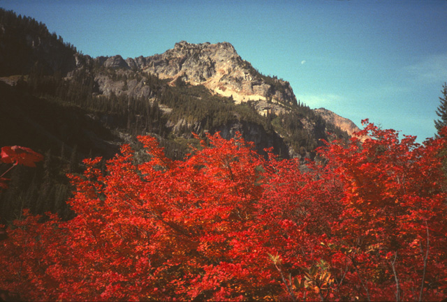 In the fall, many areas of the Cascades don a riot of colors.  Here vine maples in Mineral Creek below Parks Lakes show flaming reds.