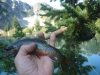 Brookie in Hand