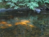 Sunlight on Creek 093