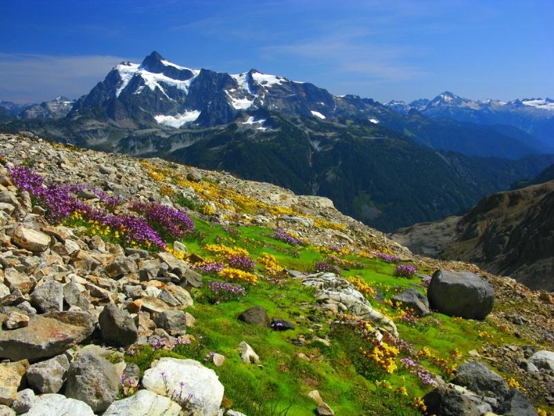 18 Talus Flowers-moss & Mt Shuksan - Joe Lienhard