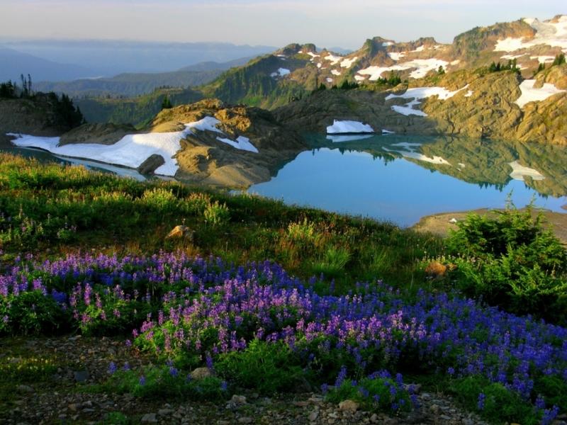 19 Sunrise on Mountain Lupine - Joe Lienhard