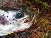 24 Cranberry Bog - John Nelson