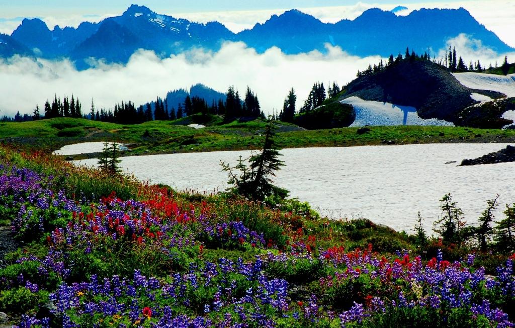 20 Yu - Alpine Bloom