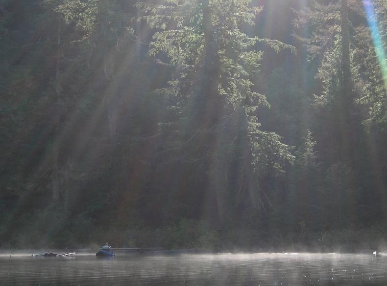 22 Burnell - Morning Fog