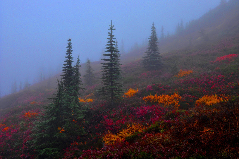 `2nd place - Peeking through the Fog - Yanling Yu