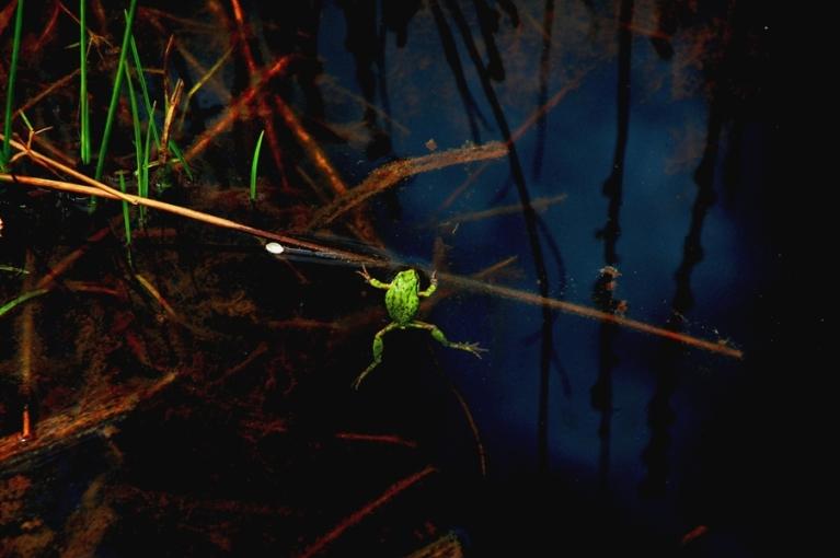 Happy-Froggy