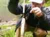 Fish-Survey