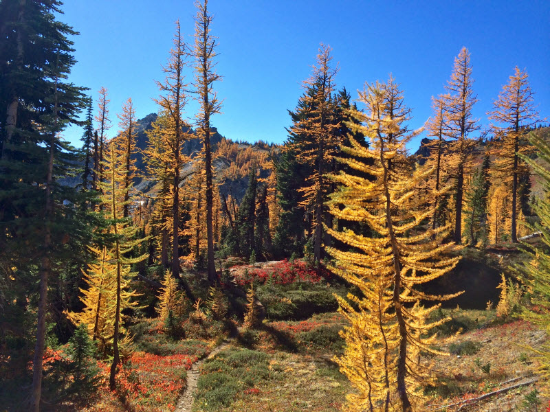 Jed Sires Golden Larch Trail