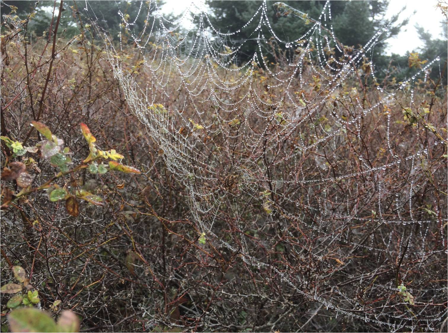 3-Spider-web-David-Berger