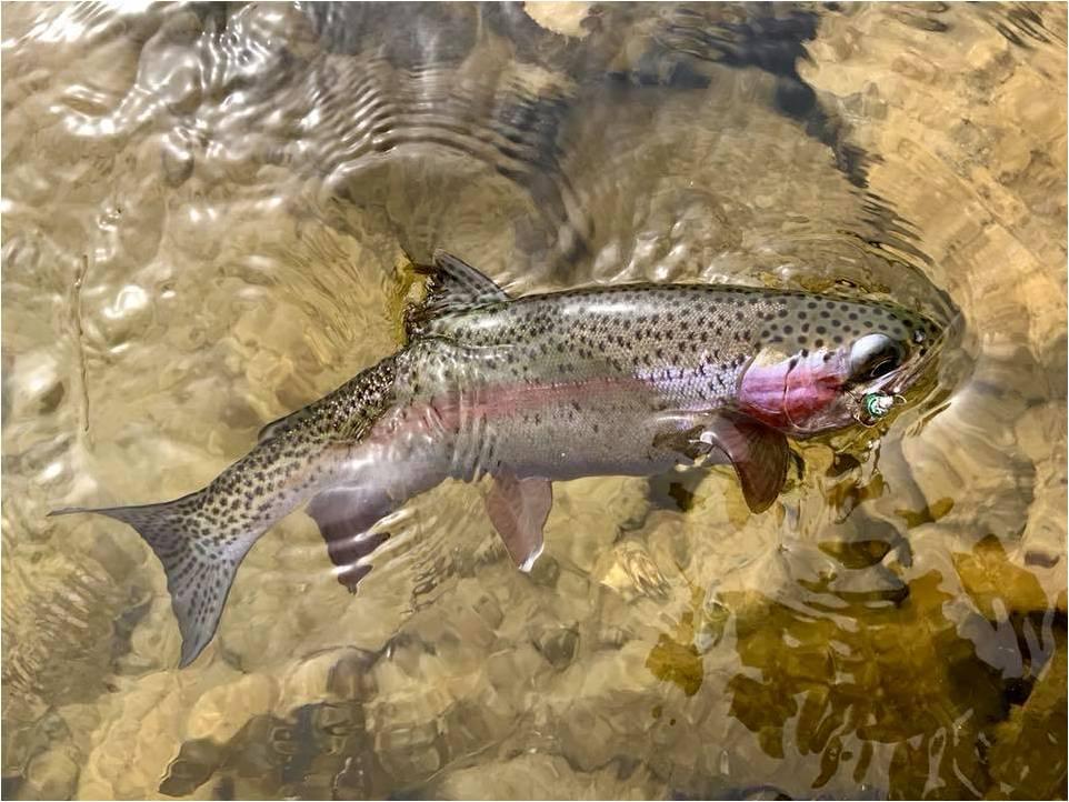 31-Kris-Harken-Colorful-trout