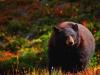 45-Smokey-The-Bear-New-Park-Ranger-Yanling-Yu