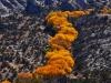 31-Yanling-Yu-Golden-Fall