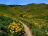 33-Rex-Johnson-Best-Flowers-We-have-Ever-Seen